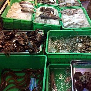 Im Truc Linh 2 Restaurant in Nha Trang kann man sich jede Menge Merresgetier zum Essen aussuchen. (Foto: Ruti)