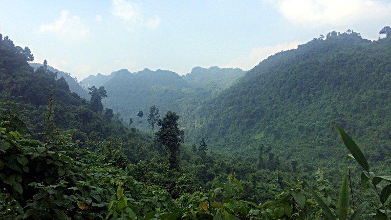 Der Dschungel im Phong Nha-Ke Bang Nationalpark in Vietnam