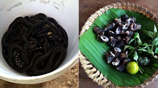 Schlange vorher und nachher - links noch lebende Exemplare im Eimer, rechts gegrillt und zerkleinert. (Foto: Ruti)