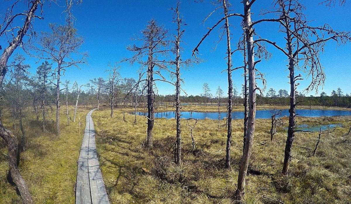 Der Nationalpark Lahemaa etwa 70 Kilometer von Tallinn, Estlands Hauptstadt entfernt, beherbergt ein gigantisches Sumpfgebiet. (Foto: Ruti)