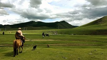 In der Zentral-Mongolei ist es schön grün. (Foto: Ruti)