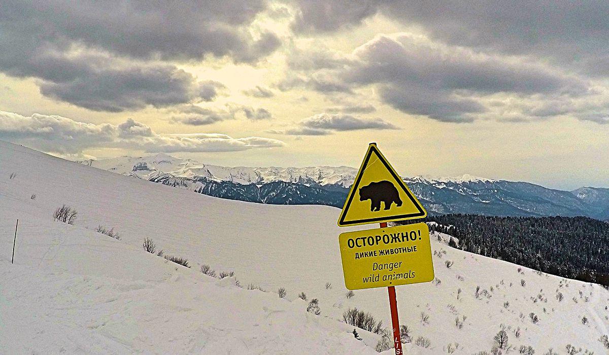 Auf der Piste in Sotschi werden auch Klischees erfüllt. Ob wirklich manchmal Bären Skifahrer attackieren? (Foto: Ruti)