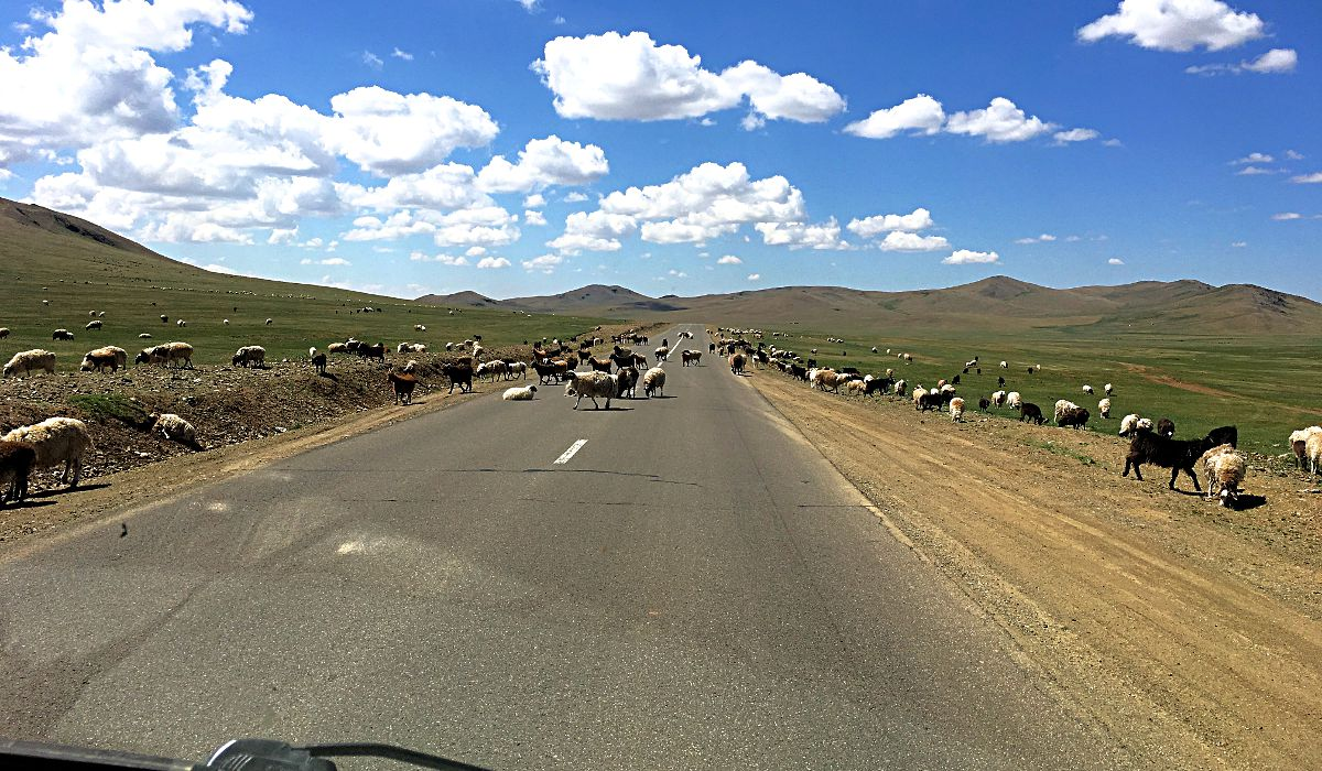 In der Mongolei wimmelt es nur so von Ziegen und Schaafen. (Foto: Ruti)