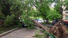 Nach dem Sturm in Moskau, siehts in meiner Nachbarschaft heftig aus. (Foto: Ruti)