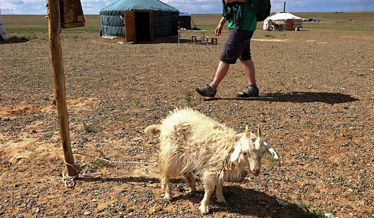 Das kleine Schaf war hier angebunden, weil es krank war und von der Herde isoliert wurde, um zu genesen. (Foto: Ruti)