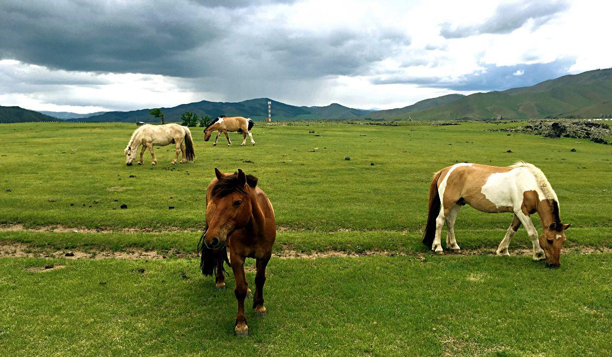 Auch die Pferde laufen in der Mongolei frei durch die Steppe. (Foto: Ruti)
