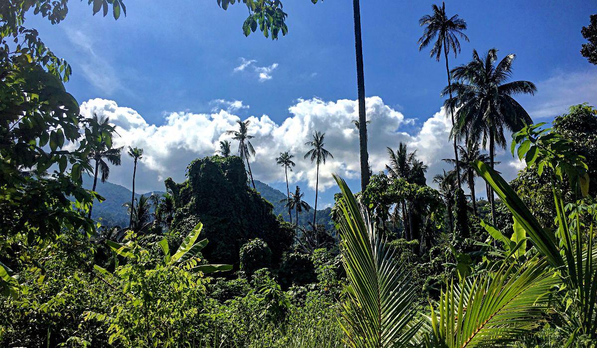 Der Dschungel von Tioman (Foto: Ruti)