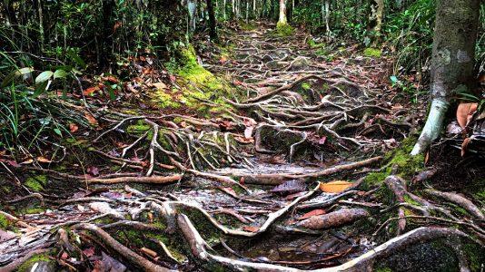 Dschungelpfad im Bako-Nationalpark auf Borneo (Foto: Ruti)