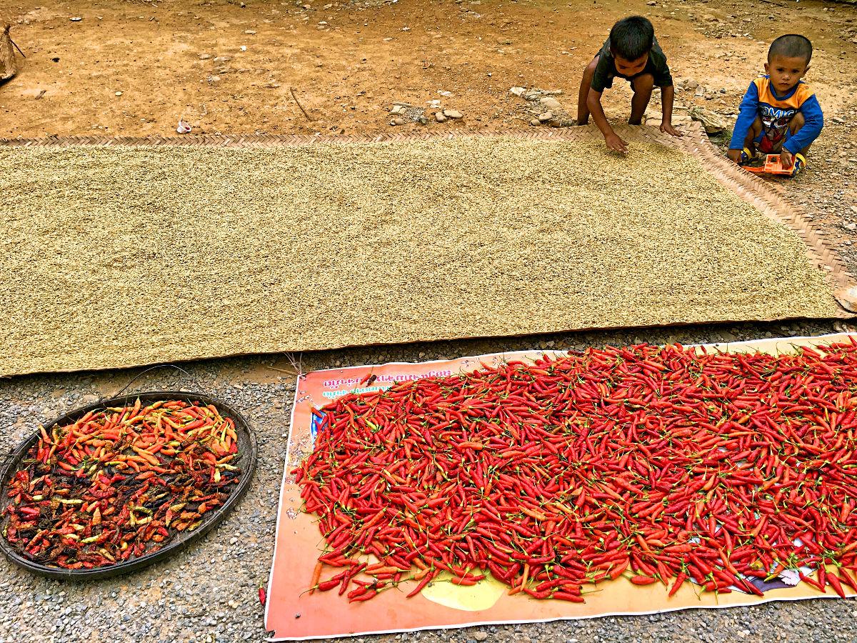 Chili, Reis und spielende Kinder am Straßenrand in Laos (Foto: Ruti)