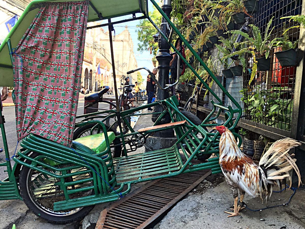 Hähne und Tricycles - zwei Symbole für die Philippinen. (Foto: Ruti)