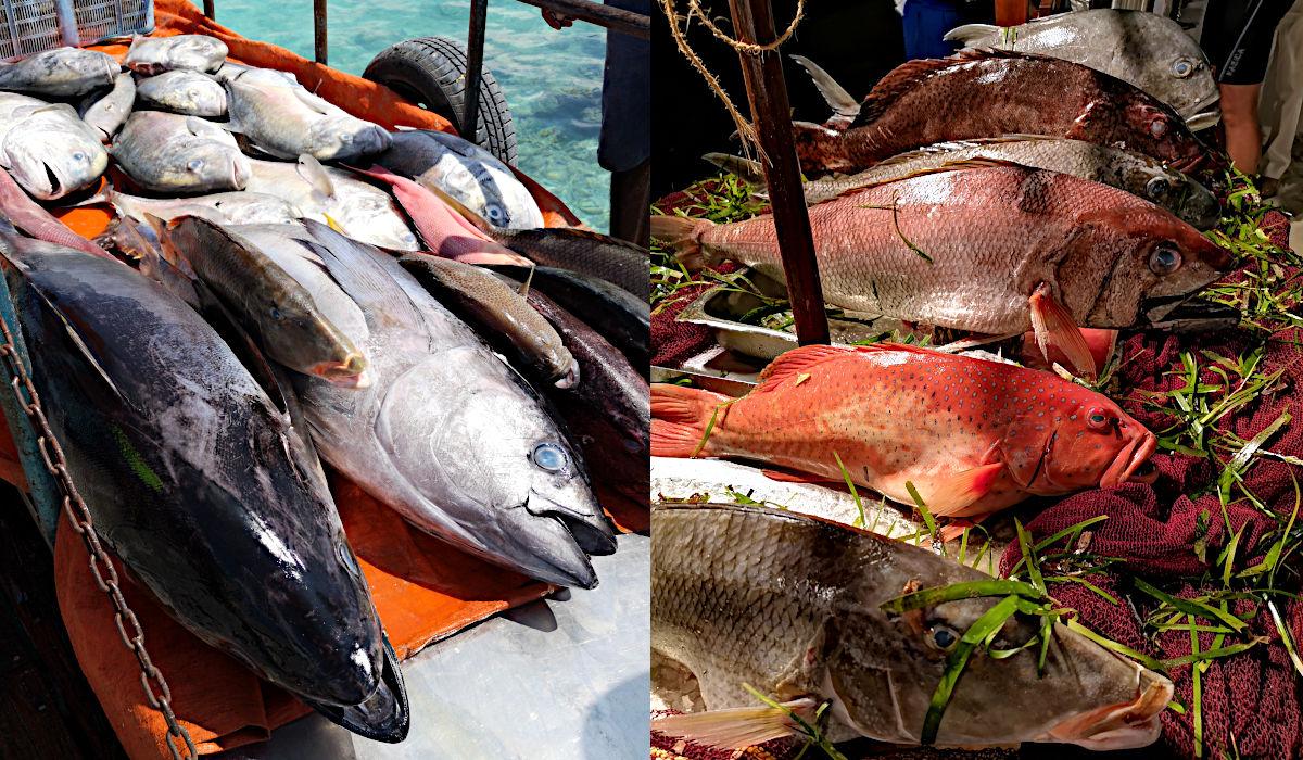 Links: der frisch gefangene Fisch, und rechts: abends am Buffet im Club Med Kani. (Foto: Ruti)