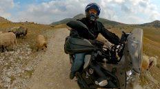 Die letzten 11 Kilometer nach Lukomir führen über eine Schotterpiste voller Schafe. (Foto: Ruti)